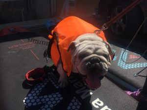 dogsurfparty201825